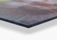 Wanddecoratie plexiglas